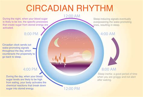 circadian rhythm sleep disorders picture 13
