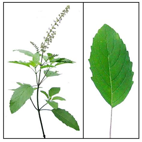 find phone number dunia herbs picture 13