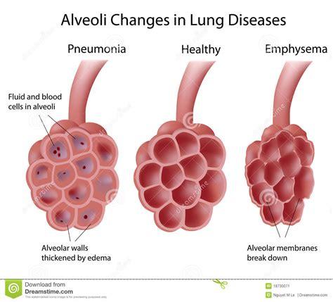 urdu health sites picture 11