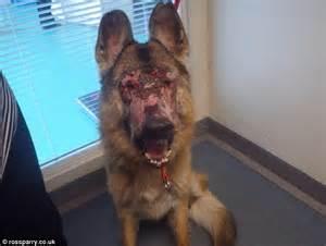 dog skin problem picture 6