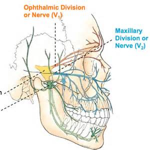 ciliary muscle and trigeminal eye pain picture 6