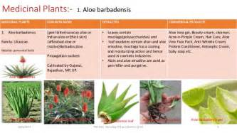 herbal plants and its uses with procedures picture 3
