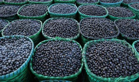 acai berry and blood pressure medications picture 9