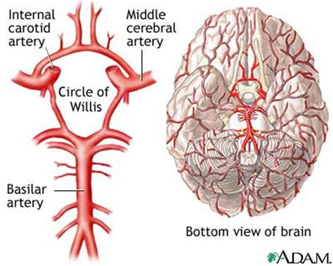 artery blood flow picture 7