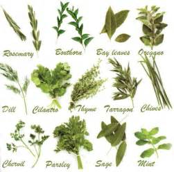 Glossary of herbs and their uses picture 6