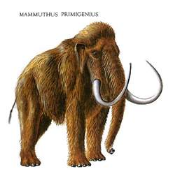 mammoth h picture 6