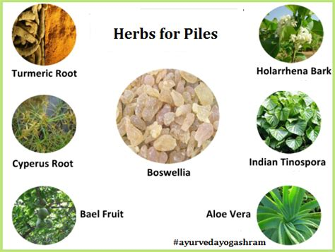 philippine herbal plant treatment for hemorrhoids picture 4