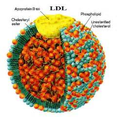 Ldl cholesterol picture 6