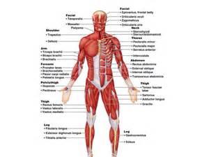 digestive organs quizlet picture 13