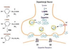 herbs for dopamine d2 receptor picture 10