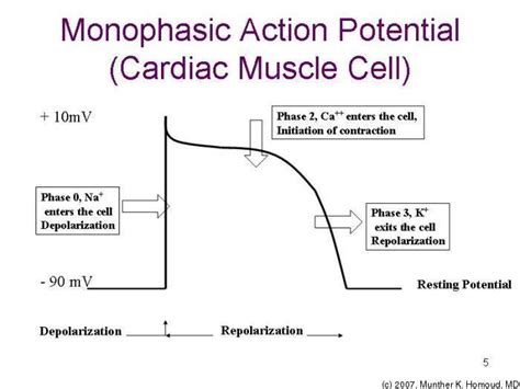 does ecg directly measure action potentials in muscle picture 8