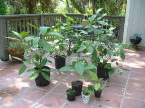 kratom clones for sale picture 2