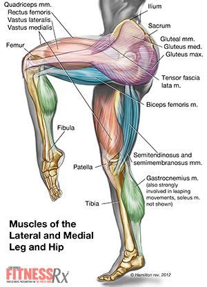 how many muscle in a body picture 12