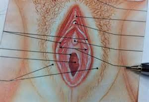 urethral hair picture 3