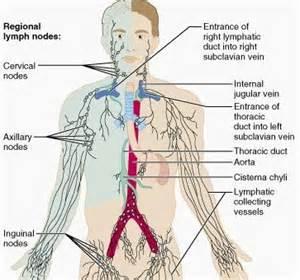 autoimmune thyroiditis disease axillary lymphocytic lymph nodes picture 5