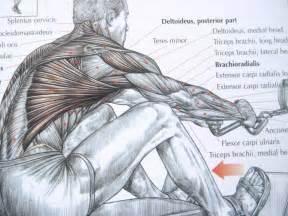 bodybuilding bones exercise and anatomy picture 3