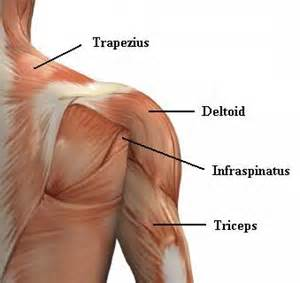 pain in between shoulder blades can being a picture 3