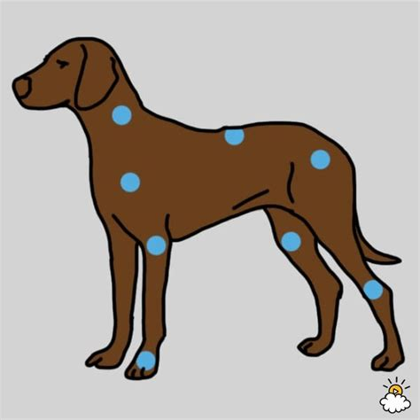 canine pain relief therapy picture 7