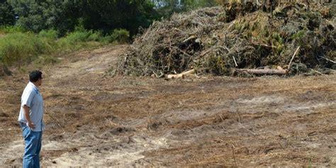 central florida debris disposal picture 1