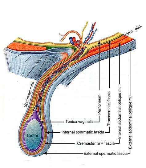 weak bladder picture 5