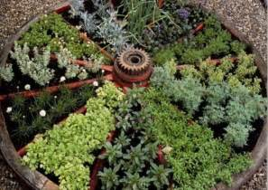 herbal garden design picture 1