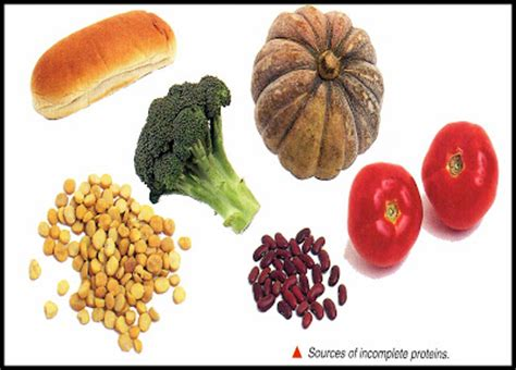 foods that contain enzymes and amino acids picture 7