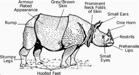 rhino magic diet picture 2