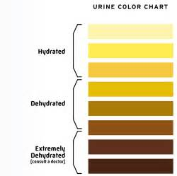 bladder test drink 40 ounces of water in picture 3