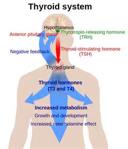 where to by thyroid by greater pharma picture 6