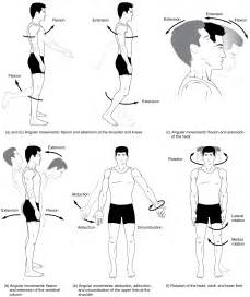 joint movements anatomy picture 2