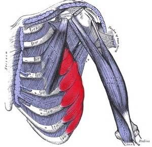 Muscle pain in rib cage picture 1