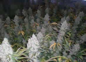 grow smoke picture 2