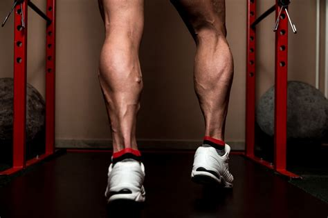 fast twitch muscle fat picture 14