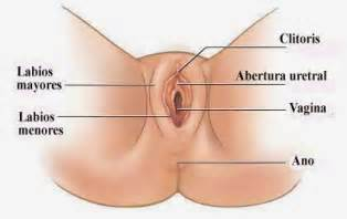 can herpes spread into urethra? picture 3