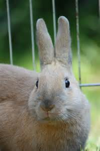 natural treatments for eye infection in rabbit picture 7