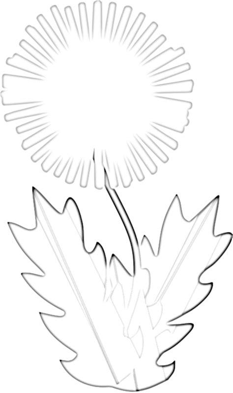 dandelion coloring picture 13