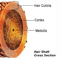 deposits on the hair shaft picture 10