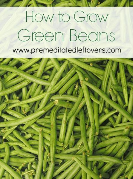 green beans increase penise picture 21