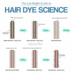 hair science picture 3