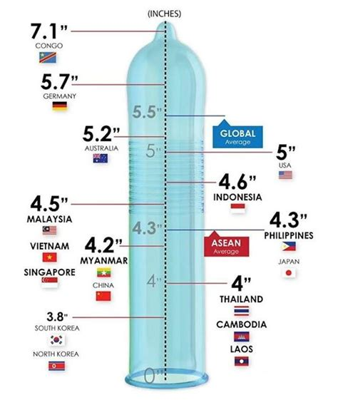average size of a mans penis picture 13