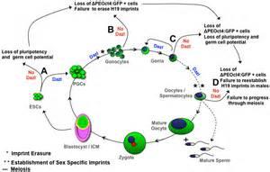 diagram gastrointestinal picture 14