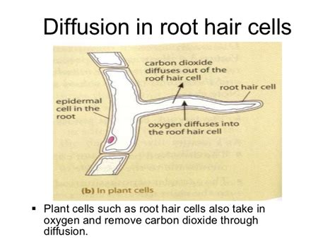 carbon dioxide in hair picture 2