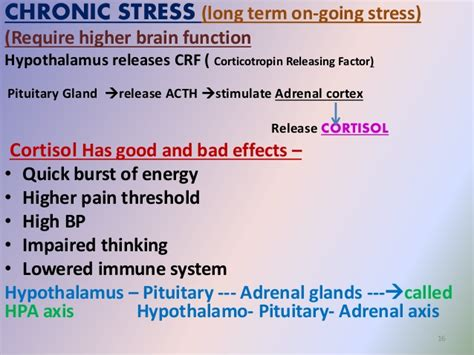 aging and adrenal cortex picture 5