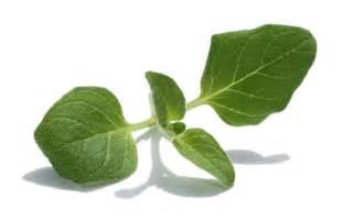 herbal plus oregano picture 7