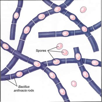 cell skin reproduction picture 3