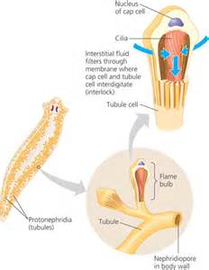 digestive fluids picture 3