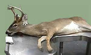 can deer antler spray cause a female to picture 1