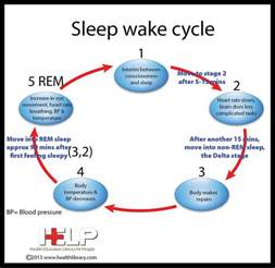 sleep and waking cycles picture 1
