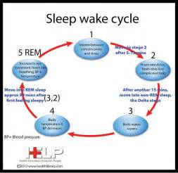 sleep and waking cycles picture 2