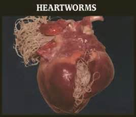 intestinal worms in s picture 15